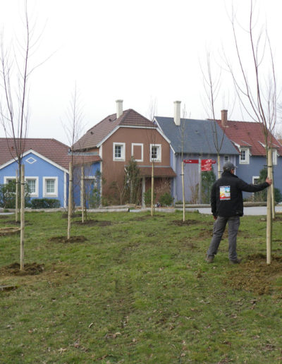 COULEURS-ET-PAYSAGES-PLANTATION-ARBRE